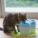 Cat H2O活性碳飲水機2L